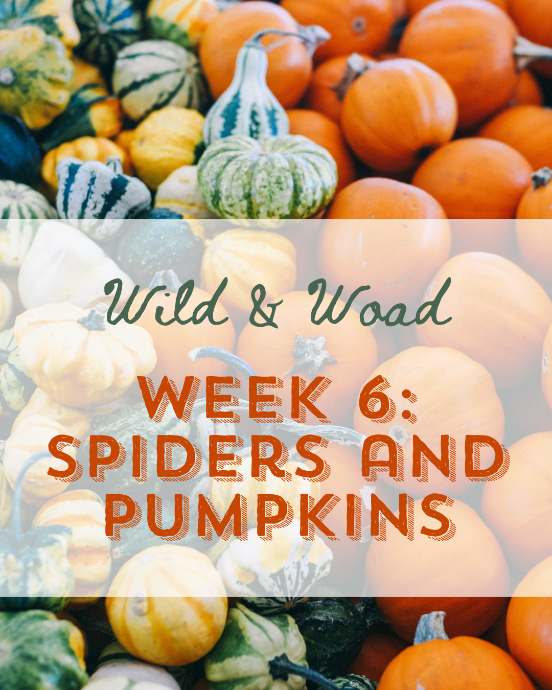Week 6: Spiders and Pumpkins